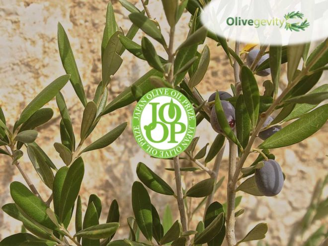 6th Japan Olive Oil Prize 2018: Gold Medal for our Organic