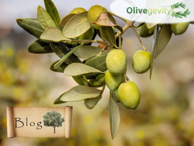 olives nutritional facts